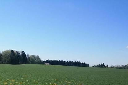 Landwirtschaftsgrund- Wiese mit Wald