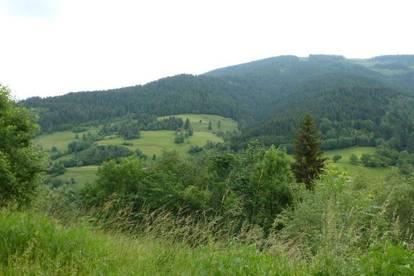 Ruhe - Aussicht - Waldrandlage!