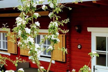 """MONTEZILA Blockhütte mit 40 """"TV & WLAN"""