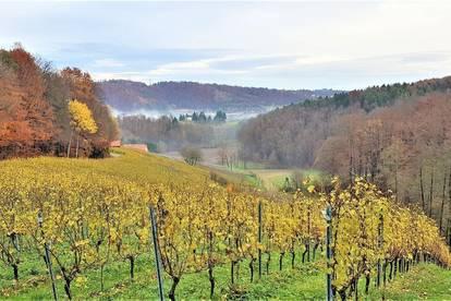 Ca. 1ha Weingarten in bester Südhanglage plus optional Wälder, Äcker und Wiesen