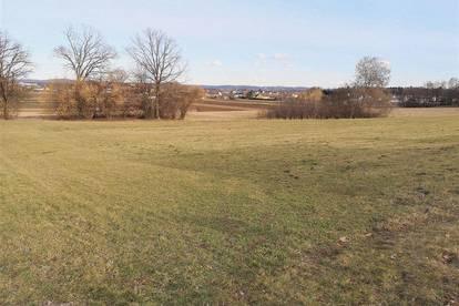 Wunderschöne, sonnige Freilandflächen - Eine Bauerwartung ist nicht ausgeschlossen!