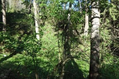 Waldgrundstück in der Nähe von Thomasroith
