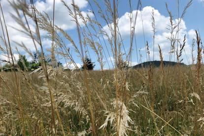 Sonnige Baugrundstücke mit Panoramablick über Graz! Provisionsfrei!