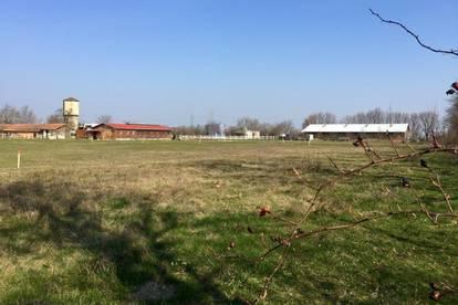 Baugrundstücke im Wohnpark Friedrichshof zu verkaufen (Bezirk Neusiedl am See)