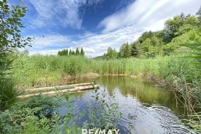 Waldflächen, Weideflächen & Teich - Wasser & Stromanschluss vorhanden