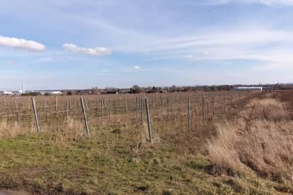 Paul & Partner: 2511 Pfaffstätten - Weinstraße - Wasserleitung - Thermenregion: Hier muss man einen Weingarten haben!