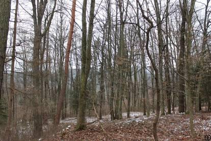 GRUNDSTÜCK - Wald