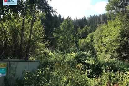 Waldgrundstück in Trieben