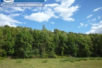 Top Geldanlage - Ihr eigener Wald!