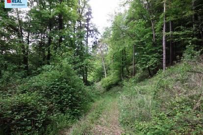 10 ha Wald in Weiten