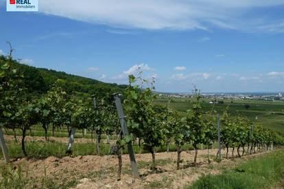 2352 Gumpoldskirchen - WERTANLAGE - wunderschöne Weingärten