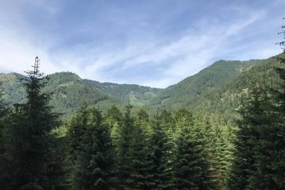 Waldflächen in Grünau