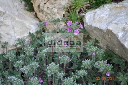 Gartenwohnung in Seenähe