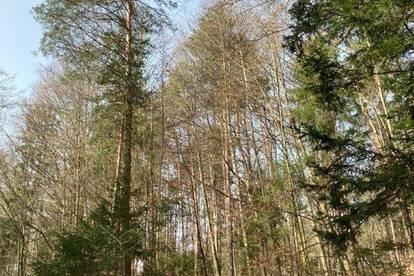 Waldgrundstücke in Wildbach