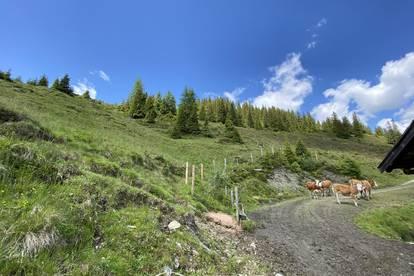 Alm ca. 54 ha mit zwei Almhütten im Oberpinzgau zu verkaufen