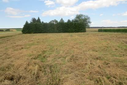 Ehemaliger Getreidespeicher auf großem Grundstück