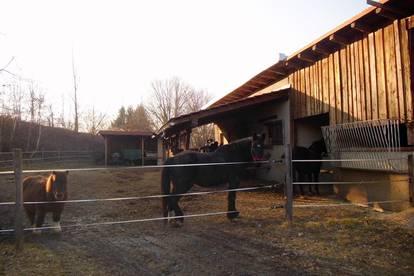 Pferdestall mit 3 Boxen zu vermieten!