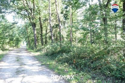 Großer Wald zu kaufen - mehr als 7 ha Fläche