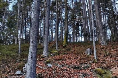 Gut erschlossene Waldparzelle KG Keutschach