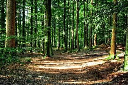 Gut aufgeschlossenes Waldgrundstück, Arnoldstein Pöckau