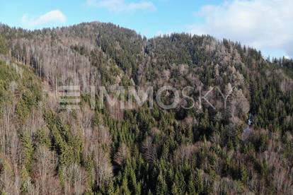 Arrondierte Waldflächen an der Grenze OÖ-NÖ!