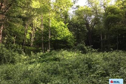 Land- und Forstflächen am Iselsberg/Stronach