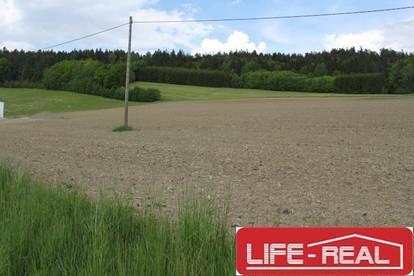sonniges Grundstück mit Nutzgrund und Wald