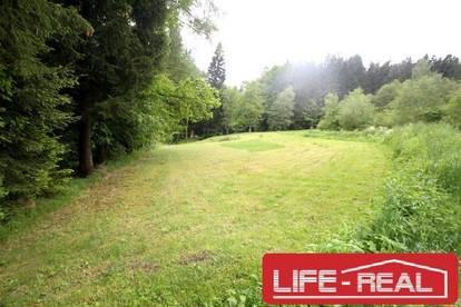 LICHTENBERG, stadtnah, naturnah, großes Grundstück