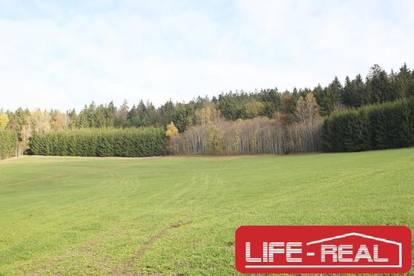 landwirtschaftlicher Nutzgrund mit Wald