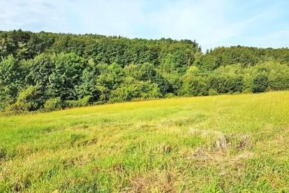 Landwirtschaftliche Nutzfläche