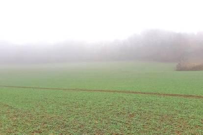 Sonniges, landwirtschaftliches Grundstück