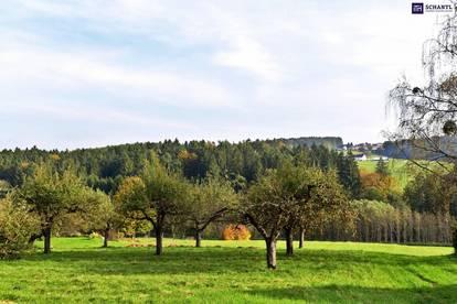VORSTADTIDYLLE: Hochmoderne Reihenhäuser + Top Ausstattung inGleisdorf! Traumhafter Eigengarten! PROVISIONSFREI!