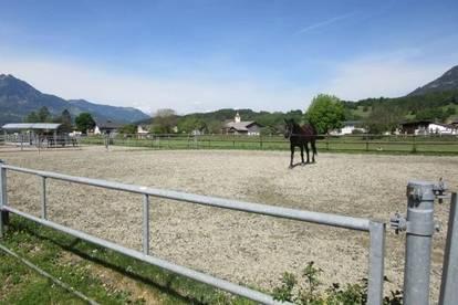 Gepflegter Pferdestall mit 10 Boxen auf ca. 7.500m² ebenem Landwirtschaftsgrund in Bludesch!