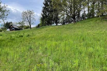 Preiswertes ansprechendes Hang-Grundstück mit Süd-Ost-Ausrichtung in Mellach (3131)