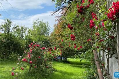 Rarität Sommerfrischehaus aus der Monarchie - Garten mit Altbaumbestand