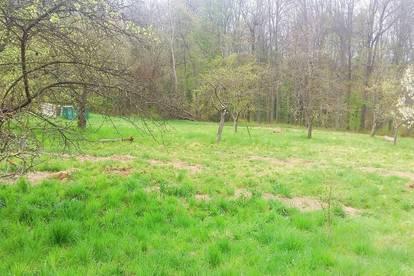 Baugrundstück in Altenberg/Leibnitz