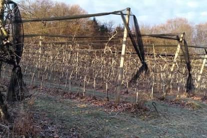 8211: Anlegerhit !! Apfelplantage mit Hagelnetz, wahlweise mit EFH oder Baugründen