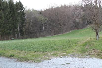 Landwirtschaftliche Fläche / Umwidmung unter einigen Vorraussetzungen möglich!