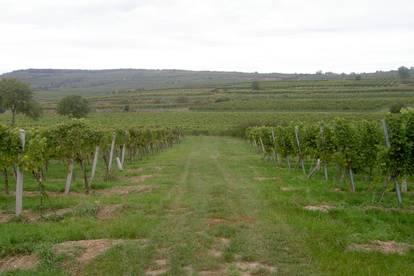 3550: Traditionsreiches Weingut im Bereich Kamptal mit Gästezimmer und Weinstube