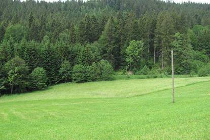 Wald mit altem Bestand und landwirtschaftlichem Nutzgrund in Helfenberg