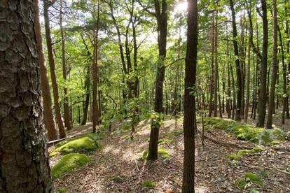Wohnen mit Wald -Haus auf steilem, 3.008qm großem Grundstück
