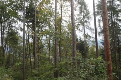 Waldfläche Nähe Eberndorf Wertanlage!