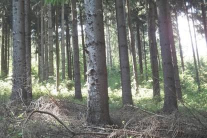 10 HA Waldparzelle mit Altholzbestand in Gemeinde Gurk