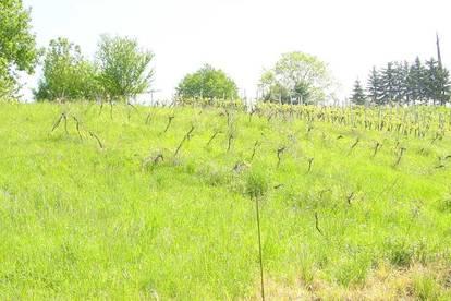 Gamlitz! Landwirtschaft mit 4 ha Weingarten, 2 Einfamilienhäuser, Pferdehaltung - Bachlauf vorhanden, Grund ca. 140000m²,