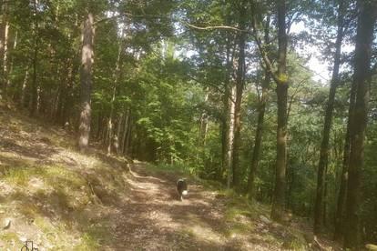 Mischwald und eingezäunte Wiesenfläche im Pömling zu verkaufen!