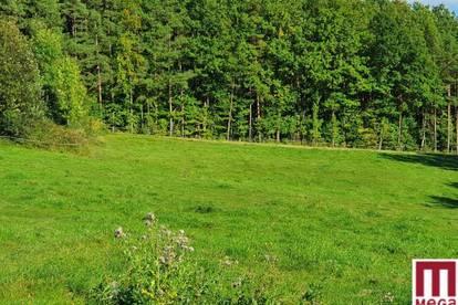 Baugrundstück in sonniger Ruhelage in Rohrbach am Kulm
