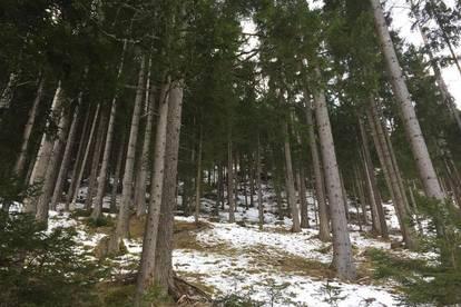 3,48 ha Waldgrundstück - interessant für Anleger