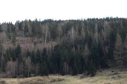 14,80 ha (bzw. 17 ha) Wald