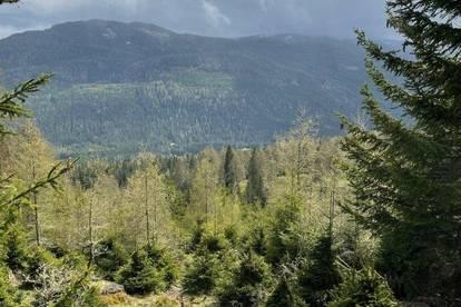 ++ 36,54 ha Forstwirtschaft - mit Top Aussicht, sehr gut bestocktem Wald und Holzlagerstelle in Tamsweg zu verkaufen ++