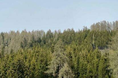 +++ 20,4 ha Waldgrundstück - mit gut bestocktem Wald in Tamsweg zu verkaufen +++
